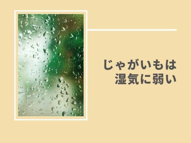 結露の写真 じゃがいもは湿気に弱い