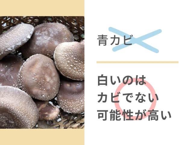 気中錦糸が発生してるしいたけの写真 ×青カビ ◯白いのはカビでない可能性が高い